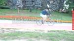 продажба на плочки за велоалеи по поръчка